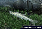 Скриншот Reel Fishing III, 6